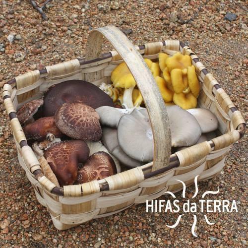 Hifas de Terra mushrooms